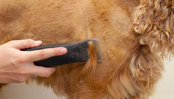 Shaving Dog's Fur